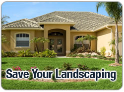 Save Your Landscaping